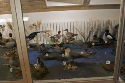 The Ólafsfjörður Museum of Natural History
