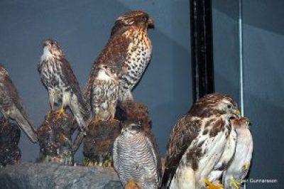 Sigurgeir´s Bird Museum